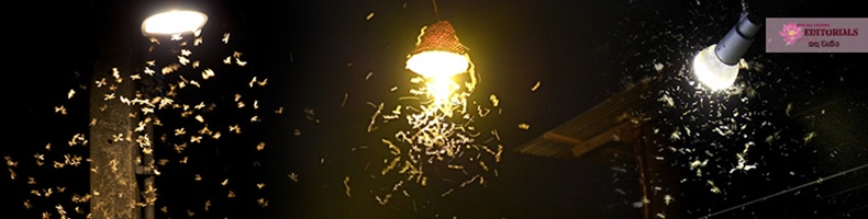 Story of a LIGHT time!